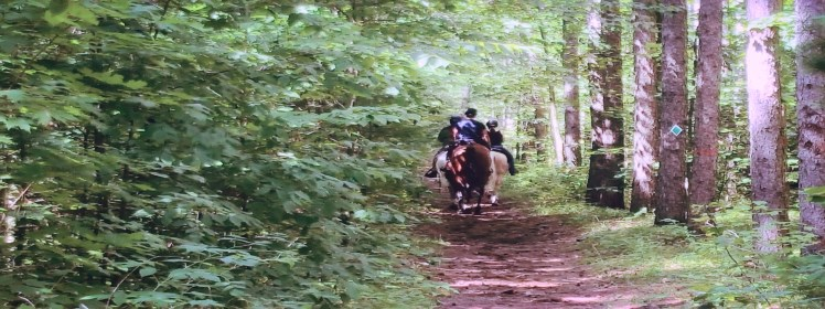 Picture of Horseback riders on a trail
