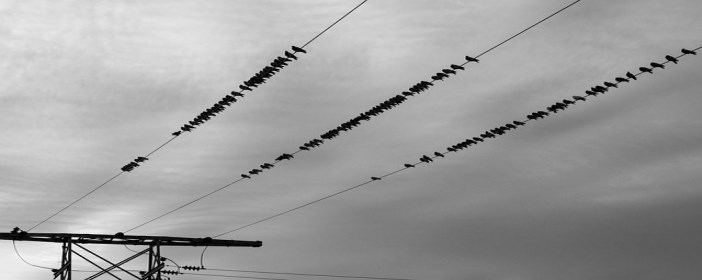Picture of Power Lines with Birds