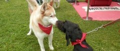 Two dogs kissing at the Dog Days of Scugog